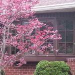 Fox Marvin Window Job AFTER Pics(10)